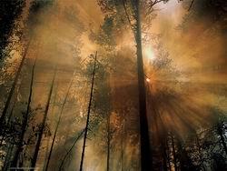 پرتوئی از نور
